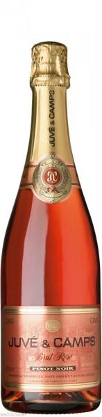 Juvé & Camps Cava Pinot Noir Rosé Brut