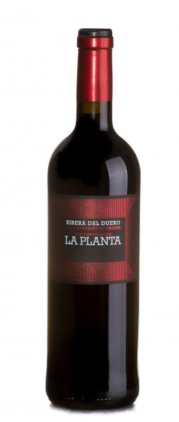 Arzuaga La Planta